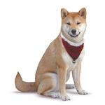 View Image 2 of Velvet Santa Bandana - Red