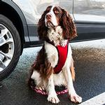 View Image 3 of Vented Vest Car Seat Dog Harness - V2 Red