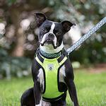 View Image 2 of Vest Dog Harness by Canine Friendly - Lime Green