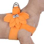 View Image 1 of Water Lilly Step-In Dog Harness by Susan Lanci - Tangerine