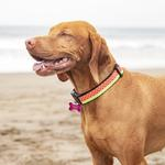 View Image 2 of Watermelon Adjustable Clip Dog Collar By RC Pet