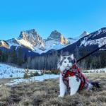 View Image 5 of Whistler Winter Dog Coat - Red Tartan