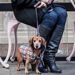 View Image 2 of Whistler Winter Dog Coat - Tan Tartan