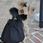 View Image 4 of Wool Fur-Trimmed Dog Harness Coat by Doggie Design - Black