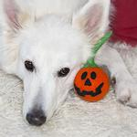 View Image 2 of Wooly Wonkz Halloween Dog Toy - Jack-O-Lantern