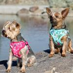View Image 2 of Wrap and Snap Choke Free Dog Harness by Doggie Design - Pink Hibiscus