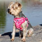 View Image 1 of Wrap and Snap Choke Free Dog Harness by Doggie Design - Pink Hibiscus