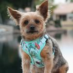 View Image 1 of Wrap and Snap Choke Free Dog Harness by Doggie Design - Surfboards and Palms