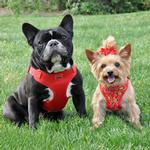 View Image 6 of Wrap and Snap Choke Free Dog Harness by Doggie Design - Tahiti Red