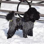 View Image 6 of Zippy Dynamics Cozy Full-Body Dog Suit
