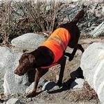 View Image 2 of ZippyPaws Cooling Safety Dog Vest - Orange