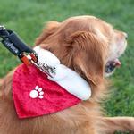 View Image 2 of ZippyPaws Holiday Paw Dog Bandana - Red