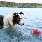 View Image 2 of Zogoflex Air Boz Ball Dog Toy - Currant
