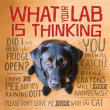 What Your Lab is Thinking Book for Humans