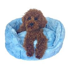 The Dog Squad Shell Dog Bed - Light Blue