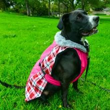 Alpine All Weather Dog Coat by Doggie Design - Raspberry Plaid