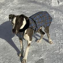 Alpine Flannel Dog Coat by Doggie Design - Brown and Blue Plaid