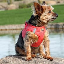 American River Ultra Choke-Free Mesh Dog Harness by Doggie Design - Coral