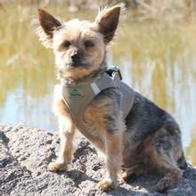 American River Ultra Choke-Free Mesh Dog Harness by Doggie Design - Fossil Brown