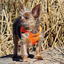 American River Ultra Choke-Free Mesh Dog Harness by Doggie Design - Hunter Orange