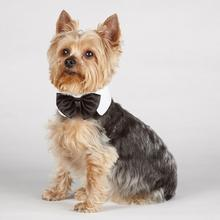 Aria Canine Royale Dog Bowtie - Black Satin