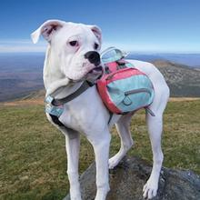 Baxter Dog Backpack by Kurgo - Sea Glass / Coral