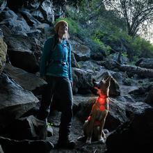 The Beacon Dog Safety Light by RuffWear