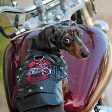 Biker Dawg Motorcycle Dog Jacket by Doggie Design - Black