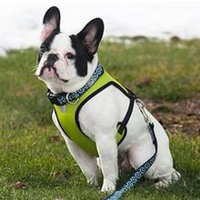Cirque Dog Harness - Lime Green Air Mesh