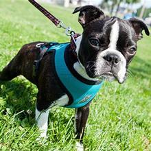 Cirque Dog Harness Teal Air Mesh on Doggie Design Dog Vest Harnesses