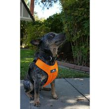 Clickit Sport Dog Harness by Sleepypod - Orange Dream