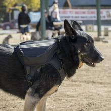 Clickit Terrain Dog Backpack By Sleepypod