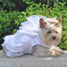 Dog Wedding Harness Dress Set By Doggie Design