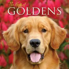 The Gift of Goldens Book for Humans