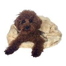 3-in-1 Cozy Dog Cuddle Sack - Caramel Bella