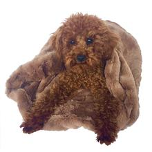 3-in-1 Cozy Dog Cuddle Sack - Mocha Bella
