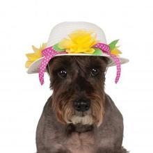 Easter Bonnet Dog Hat