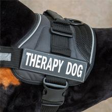 EzyDog Side Patches for Convert Harness - Therapy Dog