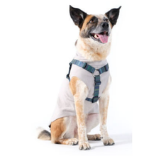 Gold Paw Step-In SwiftLock Dog Harness - Riverbed
