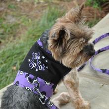 Halloween Dog Harness Vest by Doggie Design - Too Cute To Spook
