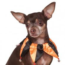 Rubie's Halloween Jester Pet Collar Scrunchie