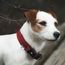 Hurtta Casual Padded Dog Collar - Lingon