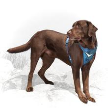 Kurgo Go-Tech Adventure Dog Harness - Coastal Blue