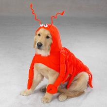 Lobster Dog Halloween Costume by Casual Canine
