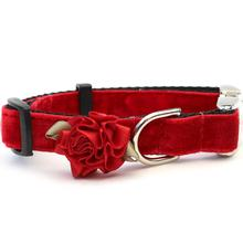 Mistletoe Velvet Dog Collar by Diva Dog - Holly Red