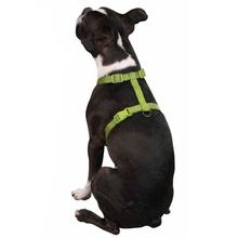 Nylon Dog Harness by Zack & Zoey - Lime Green