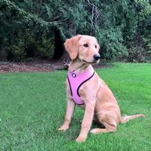 Soft & Comfy Mesh Dog Harness - Pink