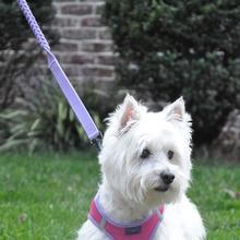 Soft Pull Traffic Dog Leash by Doggie Design - Paisley Purple