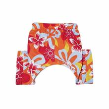 Tasmania Dog Swim Trunk - Orange
