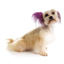 Top Performance Dog Hair Dye Gels